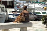 Ровинь. То ли туристы, то ли местные жители... только ... собака здесь - друг :)