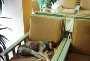 Собака в холле (другого отеля)