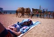 Кому верблюд?