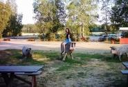 Деревянные коровки - просто поле, просто дорога, а у дороги - место для отдыха :)