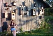 Коллекция птичьих домиков