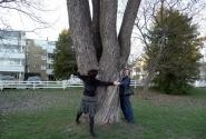 Обхват дерева.