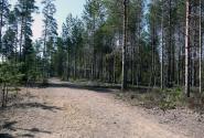 Дорога уходит в лес.
