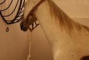 Любимая лошадь ( история 3 )