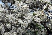 Ромашки цветут на деревьях