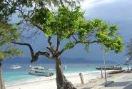дерево на Гили