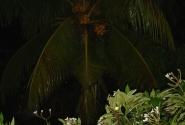 ливень на Бали