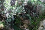 Высокая скала для прыжков