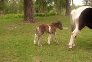 я маленькая лошадка..