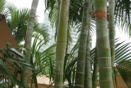 Сбоку отеля тоже бамбук