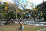 Барбадос (Бриджтаун) Королевский парк