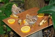 Ферма бабочек (остров Аруба)