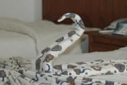 Лебедёнок покрывальчатый