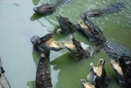 А еще в теплой минералке хорошо живется крокодилам.