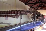 Рыбацкий храм, в нем самый большой скелет кита. Только забыл самый большой вообще, или там, или как...