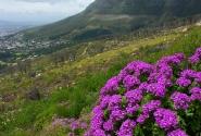 Весна в Кейптауне