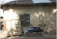 Африканская сиеста