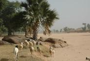 Ландшафты Африки - Мали