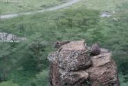 Даман. Как ни странно - не грызун, а травоядная зверюга - родственник слону. С видом Лао - Цзы пялится вдаль со стометрового утеса.