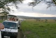 Скопление туристов вызвано появлением семейства львов