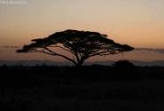 Рассвет над Амбосели