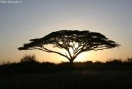 Килиманджаро проснулась