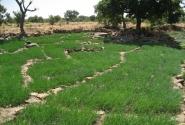 Вокруг -- луковые поля. Основная сельхозкультура в этих местах.