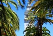 Пальмовый Сан-Франциско
