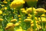 Цветы Вселенной