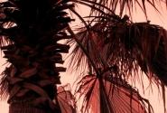 Просто пальма