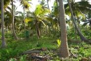 В пальмовом лесу