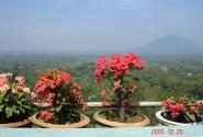 Почти камбоджийские горы)
