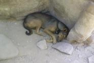 А это всего лишь простая собака, которая дрыхла в руинах Карнака