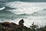 обезьяна над морем :)
