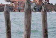 венецианские листвичные сваи