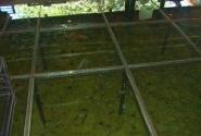 прзрачный пол с рыбками на ресепшн