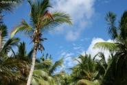 верхушки пальм на фоне неба