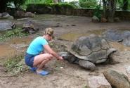 """черепаха """"прибежавшая """" первой"""