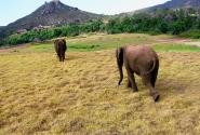 слоны уходят