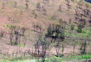 горные зебры на склоне