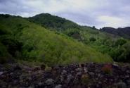 Лесной пояс Этны.