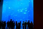 океанариум в отеле Атлантис