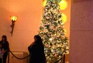елка в Аттлантисе