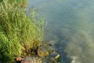 Мутные воды Балатона.