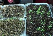 Всякие прикольные насекомые и вкусные лягушки