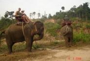 Покатушки на слониках