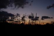 закат в Угарите