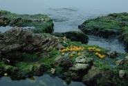 цитрусовые в море