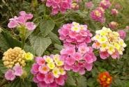 цветение вдоль дороги