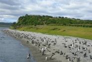 пингвиний пляж